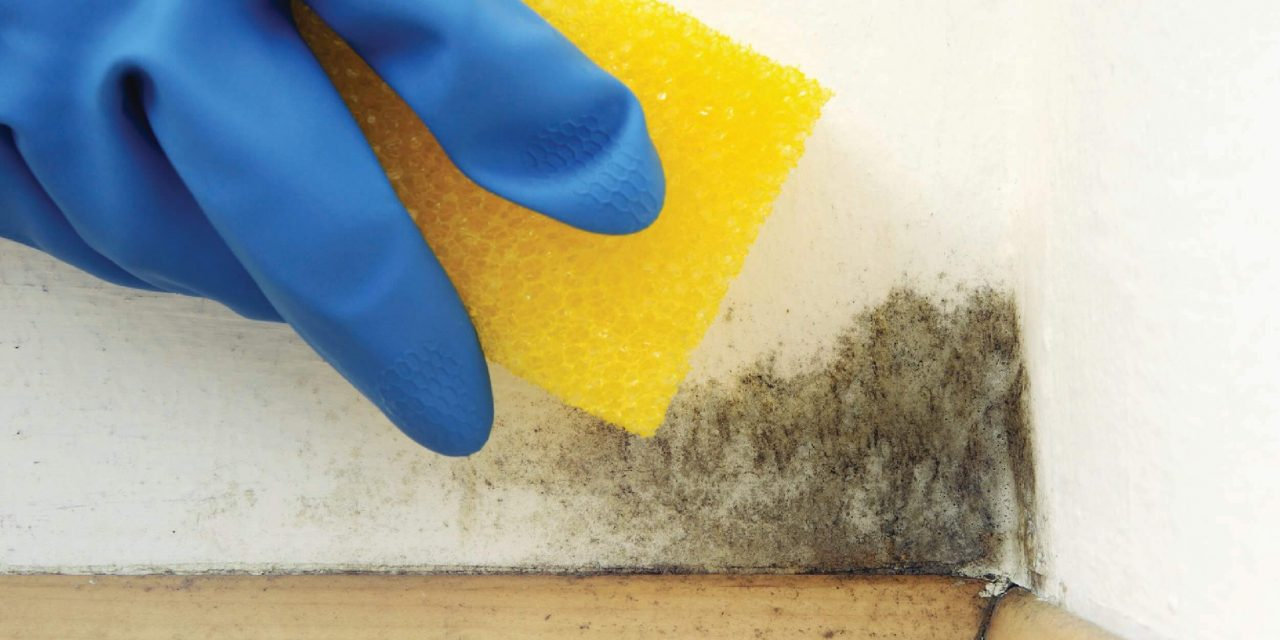 Health issues caused from Black Mould