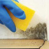Removing Black Mould